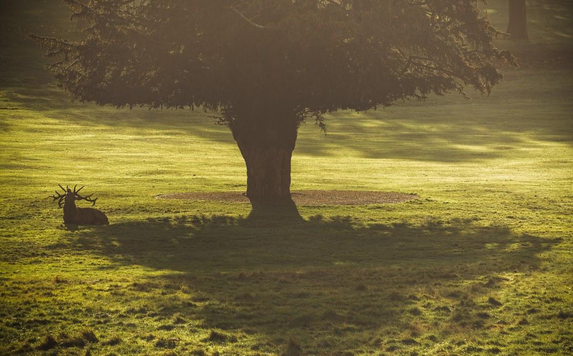 Roaring from under the cedar tree